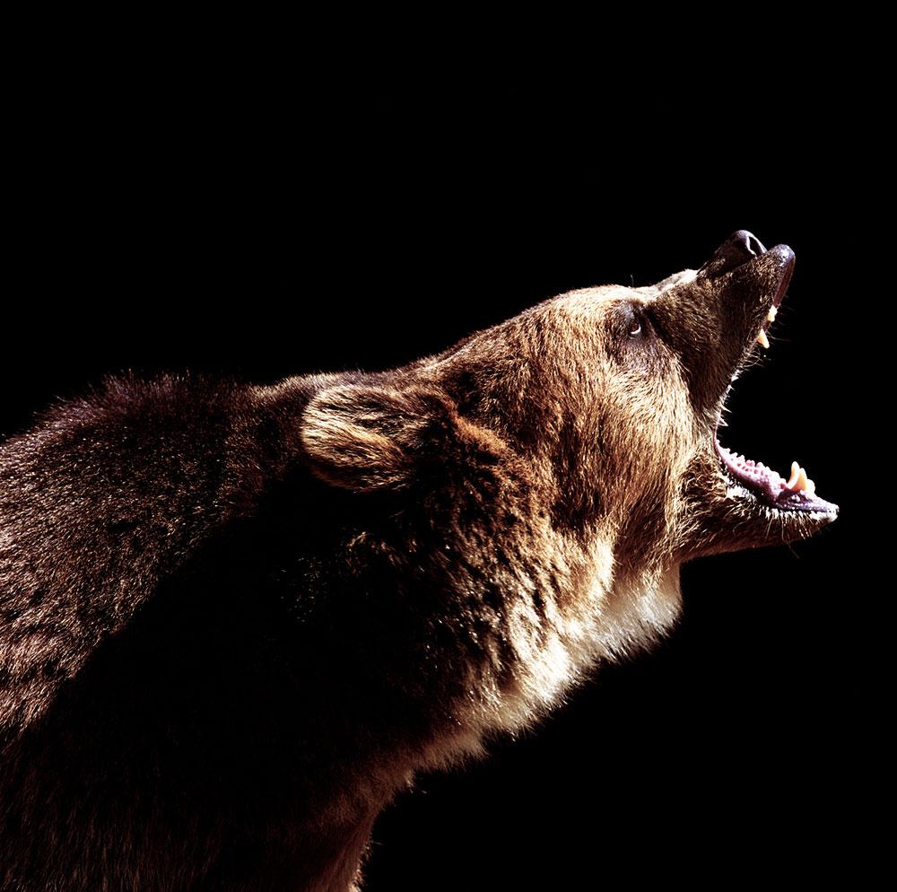 Angry bear. (Photo: Ryan McVay/Getty)