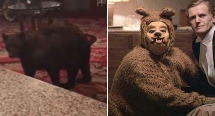 bear-overlook-king
