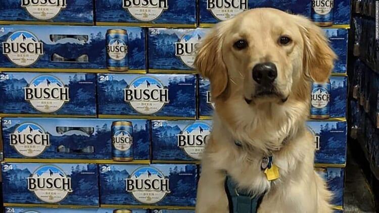 busch dog