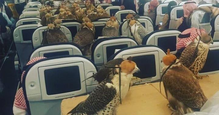 Falcons on a Plane Promo