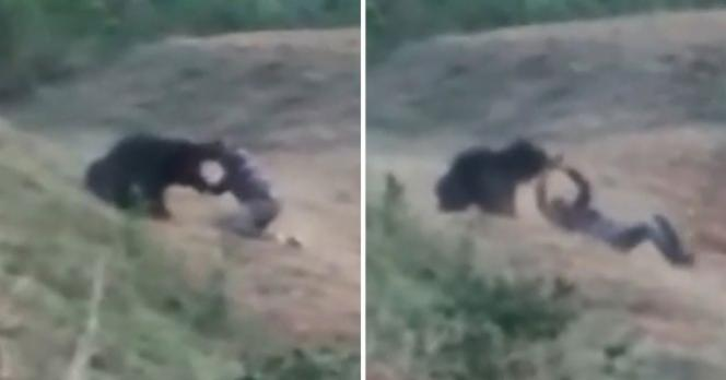 Man Mauled by Bear