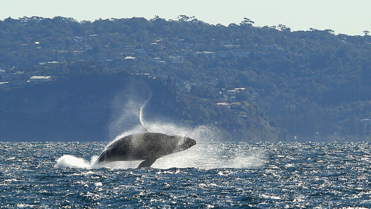 Look it's a whale yay Getty
