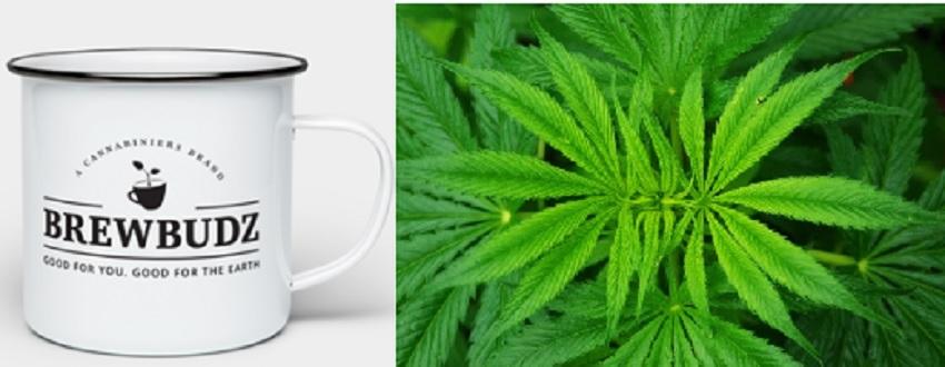 Weed and Coffee BrewBudz